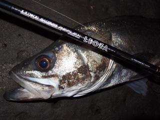 130312_nishiyama_02.jpg