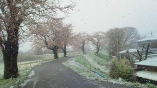 130428_hashimoto01.jpg