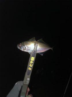 釣れる方法教えてください!