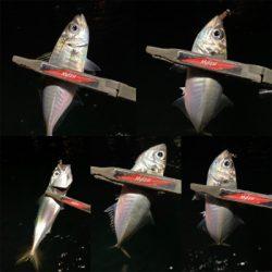 アジミルク バチ オキアミ赤ラメ
